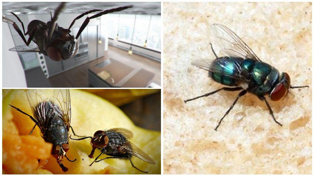 Почему муха не падает с потолка