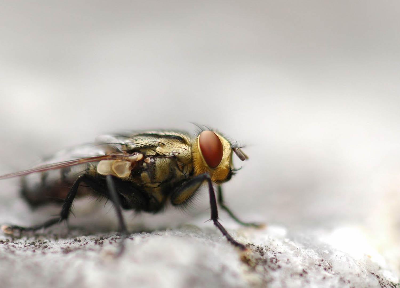 Как муха держится на потолке?