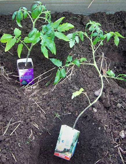 Полка для рассады на окно своими руками Выращивание рассады цветов на подоконнике