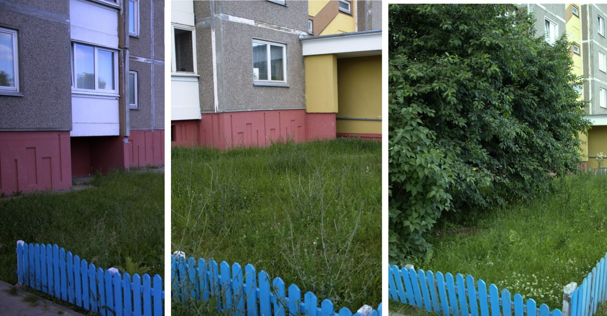 фото газон около подъезда